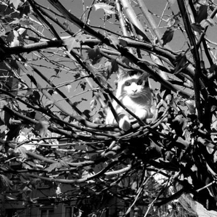 cat on tree, Canon EOS KISS X3, Canon EF-S 18-55mm f/3.5-5.6 IS