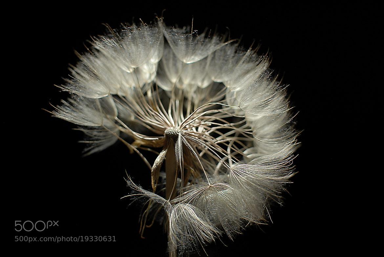 Photograph  Explosions by Slobodan  Zecevic on 500px