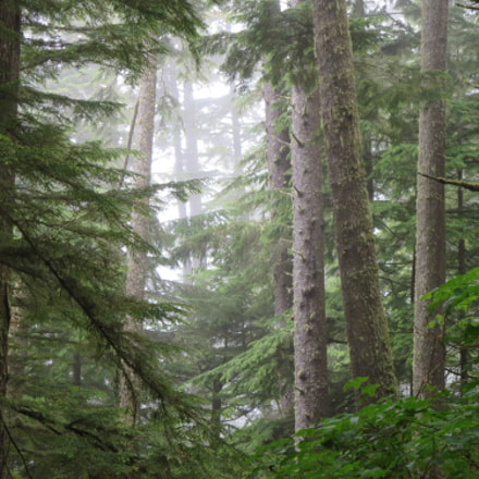 Forest in Makah Indian, Canon POWERSHOT ELPH 330 HS