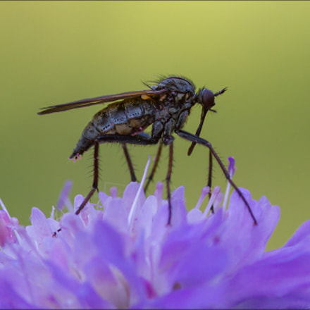 the beauty and the, Canon EOS 7D, Sigma 105mm f/2.8 Macro EX
