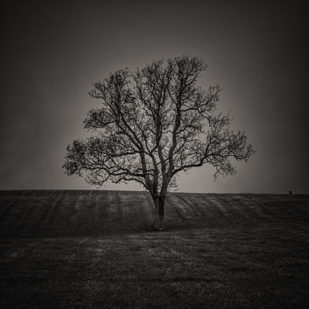 The TREE, Nikon D5100, Sigma 18-50mm F2.8-4.5 DC OS HSM