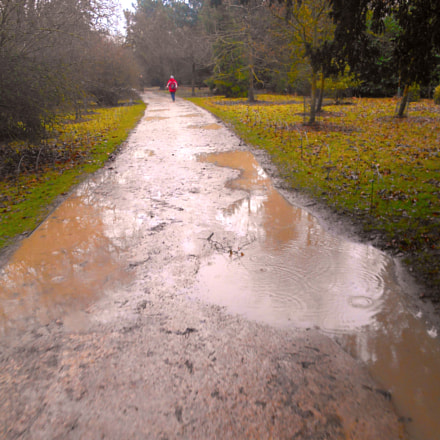Path with puddles, Nikon COOLPIX S3400