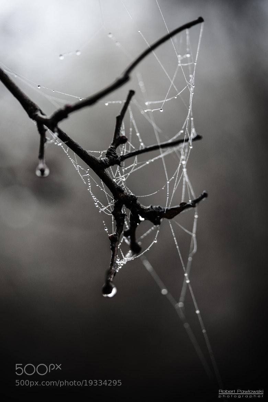 Photograph Untitled by Robert Pawlowski on 500px