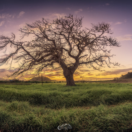 The lonely tree, Canon EOS 5D MARK III, Canon EF 16-35mm f/4L IS USM