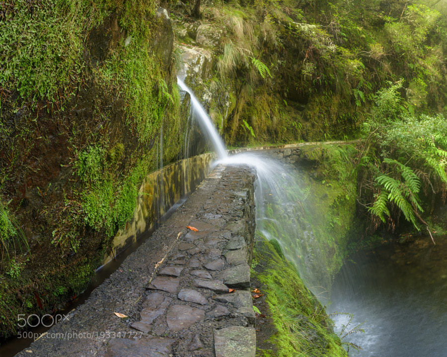 Beside the Levada do Furado