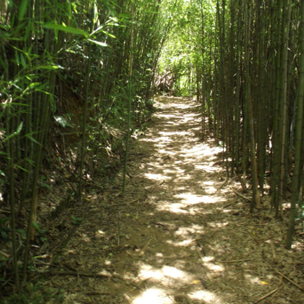 A bamboo path, Fujifilm FinePix S2850HD