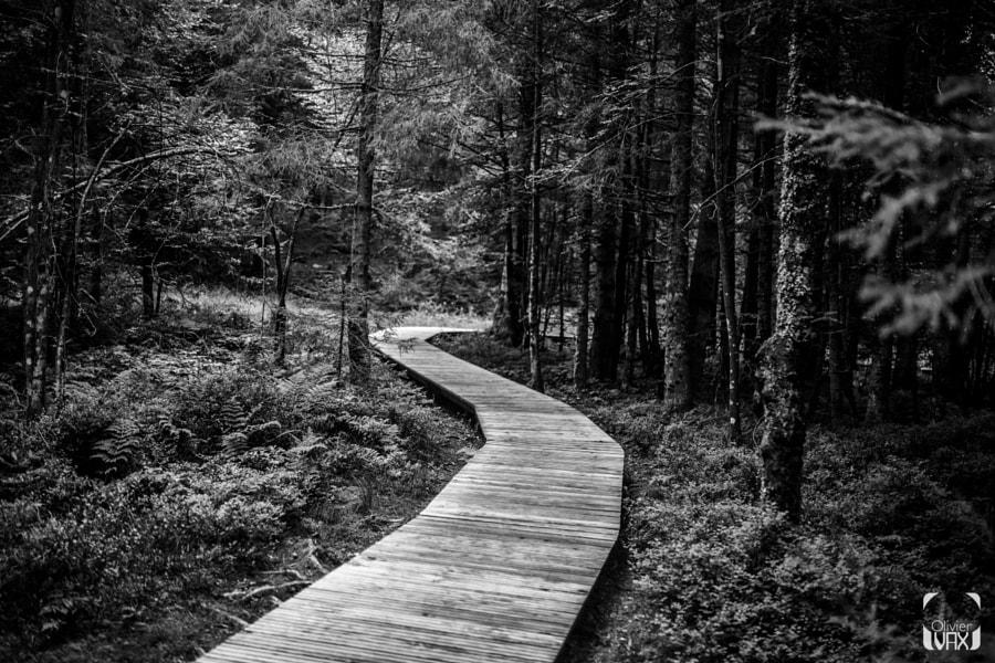 Dans les Vosges by Olivier Vax