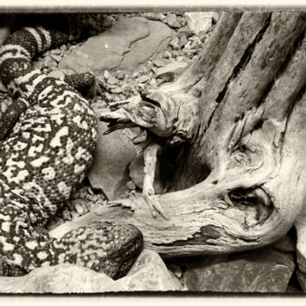 gila monster, Fujifilm FinePix S4080