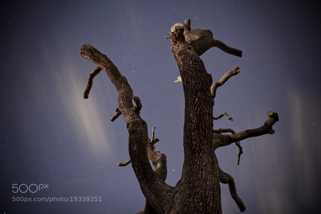 Photograph Night Tree by Leigh  Bloomfield on 500px