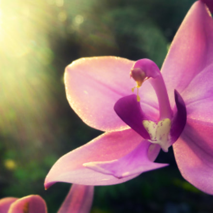 Dawn with Orchids, Panasonic DMC-ZS5