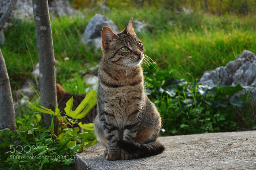 Kitty-cat by Aleksandar Sheter (alexandarsh)) on 500px.com