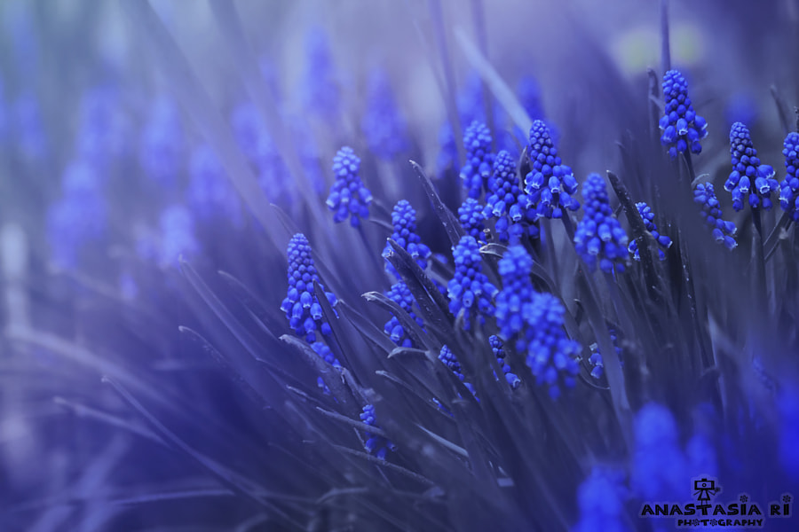 Together we are stronger by Anastasia Ri