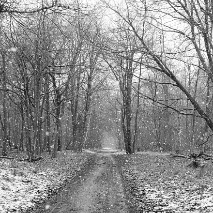 Winter Woodland, Nikon D800E, Sigma 35mm F1.4 DG HSM