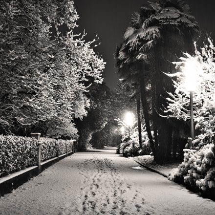 Snow on the path, Sony DSC-RX1RM2, 35mm F2.0