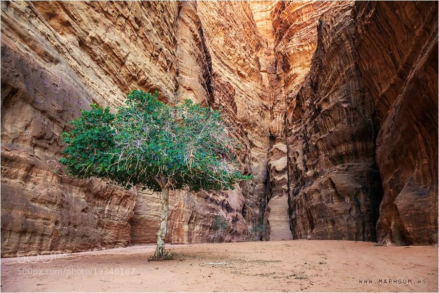 Photograph Tree by Waleed Marhoum on 500px