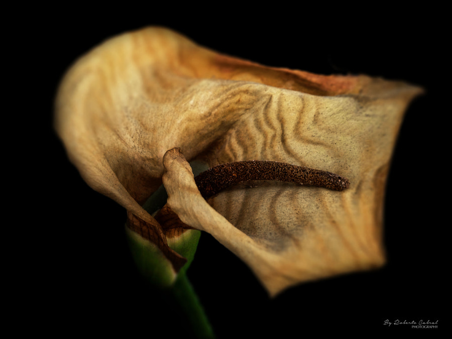 Poetry and beauty de Roberto Cabral en 500px.com