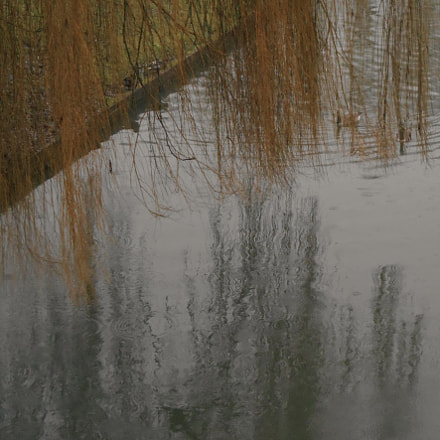 Weeping willow and waterfowl, Nikon COOLPIX S3400