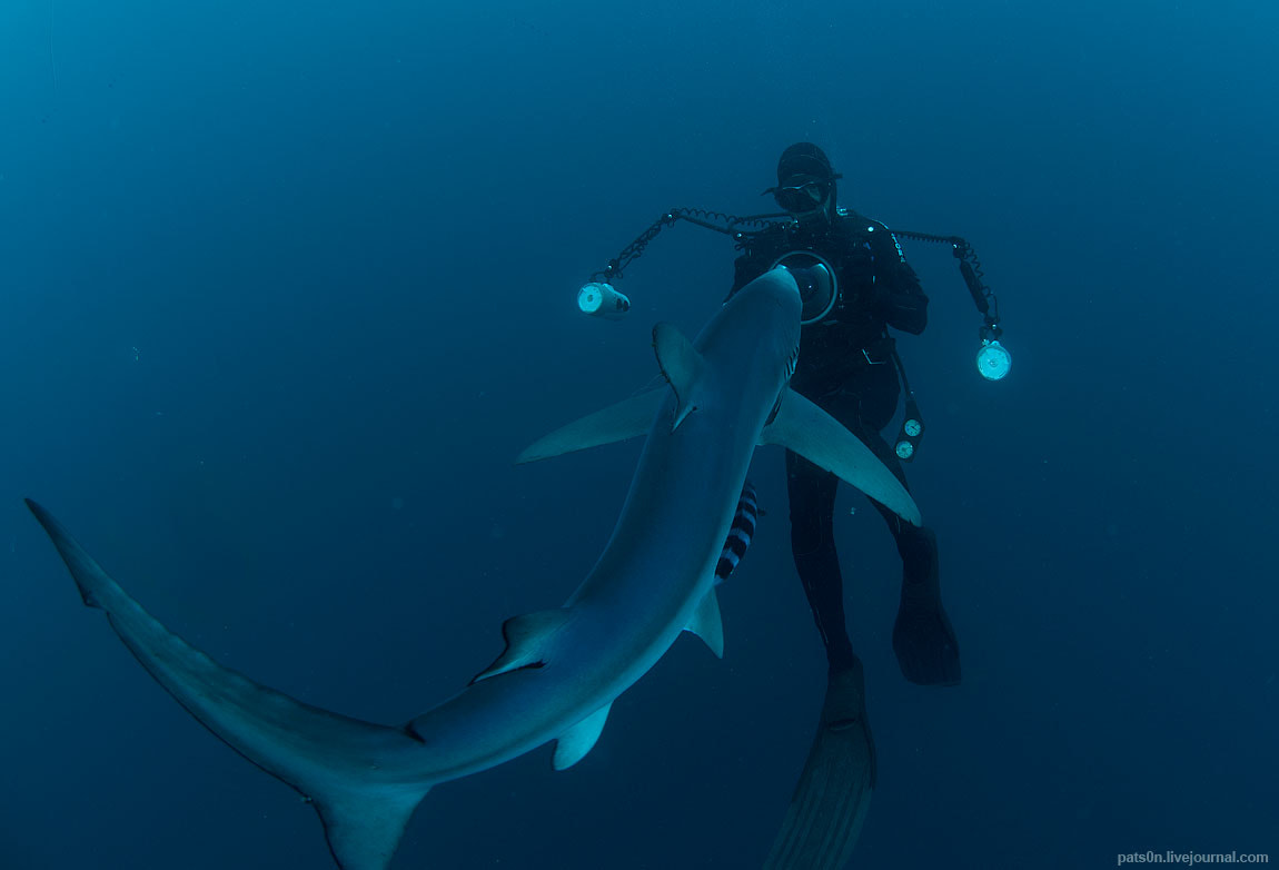 Photograph blue shark story #1 by Alexander Safonov on 500px