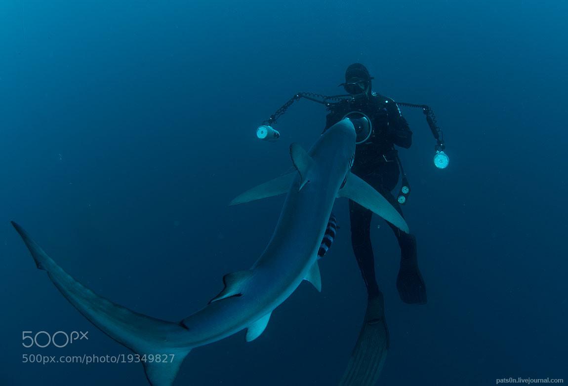 Photograph blue shark story #1 by Alexander Safonov on 500px