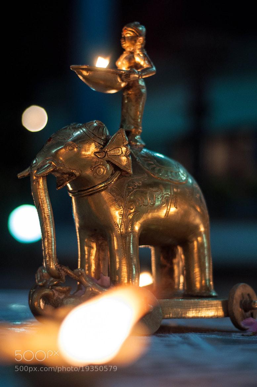 Photograph The Golden Elephant by Abhinav Asokh on 500px