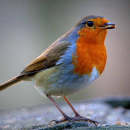 Robin.....