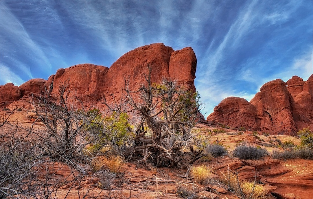 Photograph Rock & Brush  by Rick  W on 500px