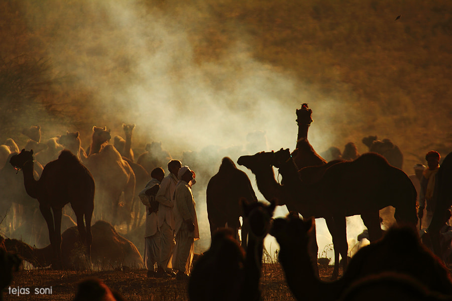 Photograph Camel traders at pushkar fair by Tejas Soni on 500px
