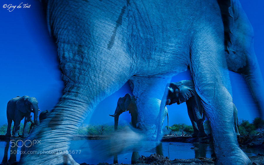 Photograph Elephant X-factor by greg du toit on 500px