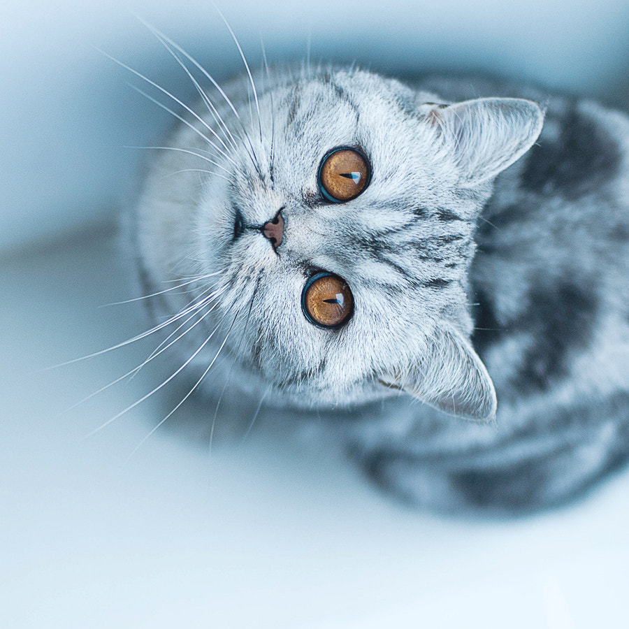 Photograph cat by Marina Sivakova on 500px