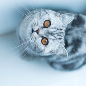 cat by Marina Sivakova on 500px.com