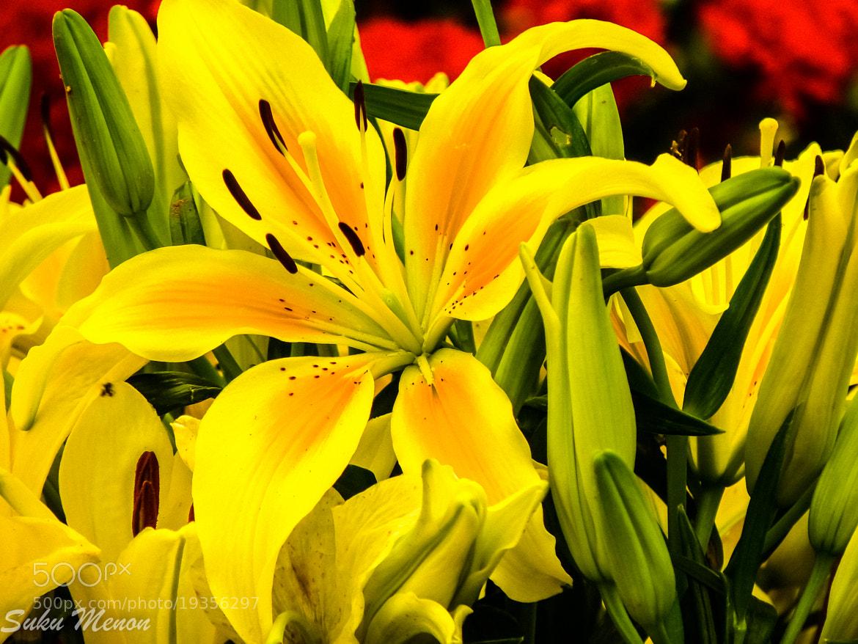 Photograph Flowers by Sukumaran Menon on 500px