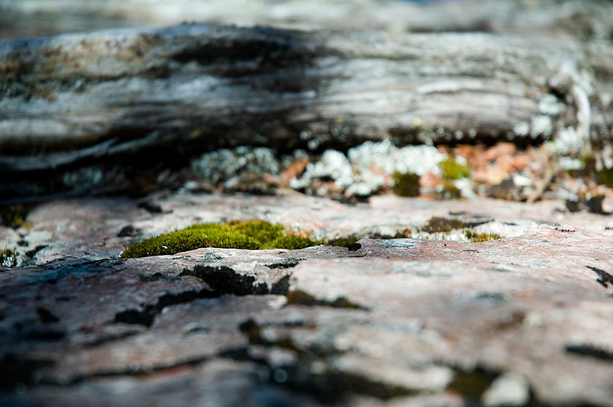 Photograph Moss by Tom Creighton on 500px