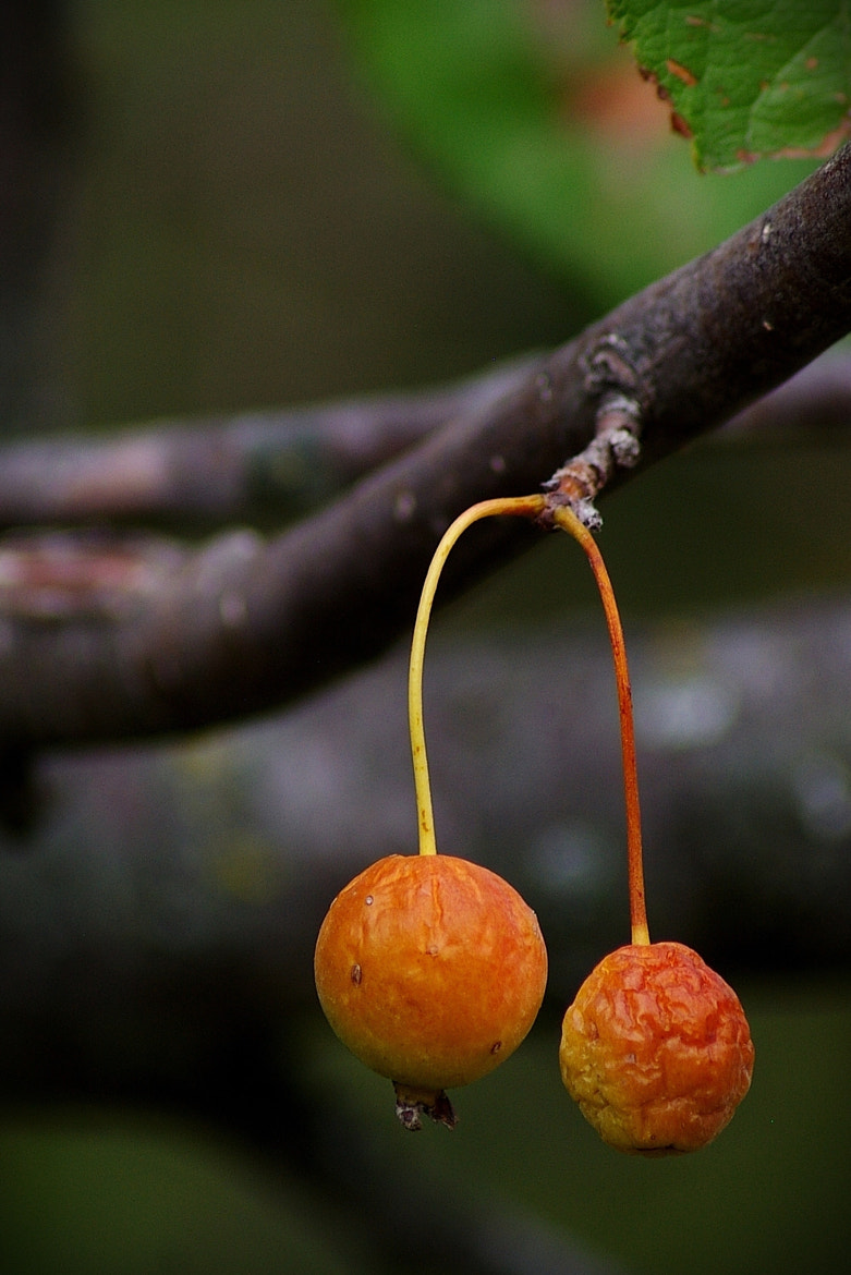 Photograph Berries by Kayleigh Wilson on 500px