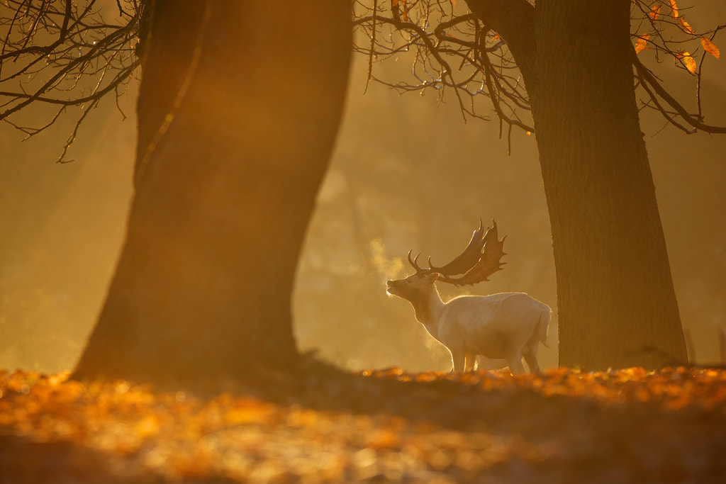 Photograph dawn light by Mark Bridger on 500px