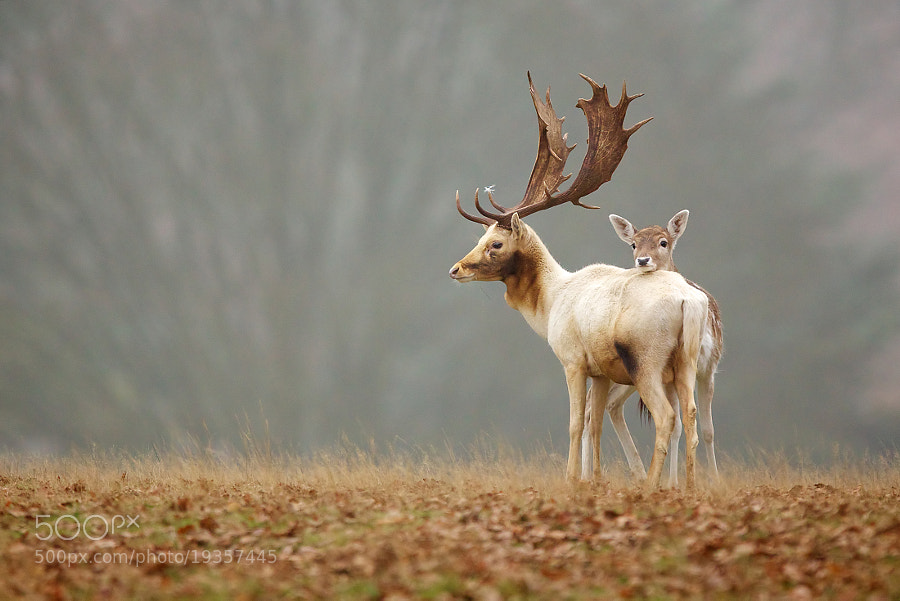 Photograph fallow love by Mark Bridger on 500px