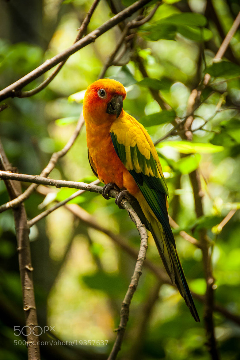 Photograph The Gentle Parrot by Jupert Sison on 500px