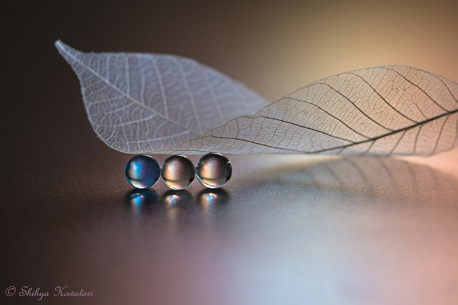 Still life nature photo by Shihya Kowatari on 500px.com