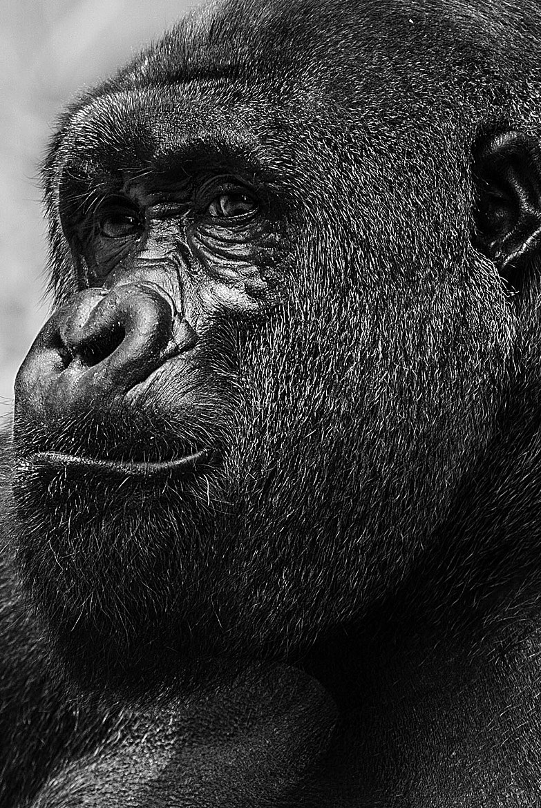 Photograph Mr. Nice Guy by Stephen Liono on 500px