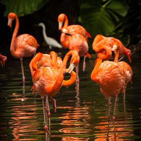 The Flamingos by Jupert Sison (Jupert)) on 500px.com