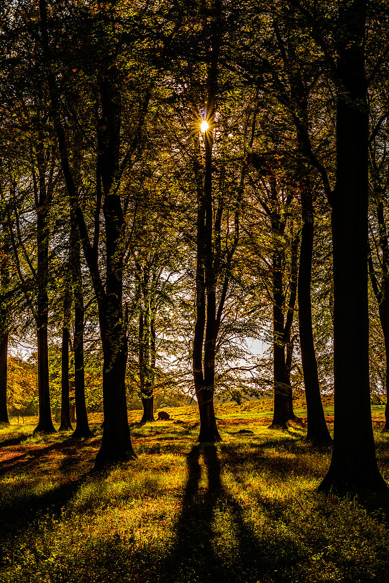 Photograph Sun & Shadows in the forrest by Mike Devlin on 500px