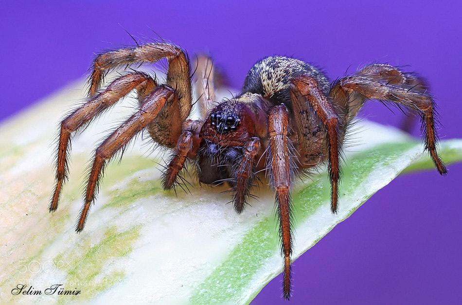 Photograph  arachnophobia by selim tümir on 500px