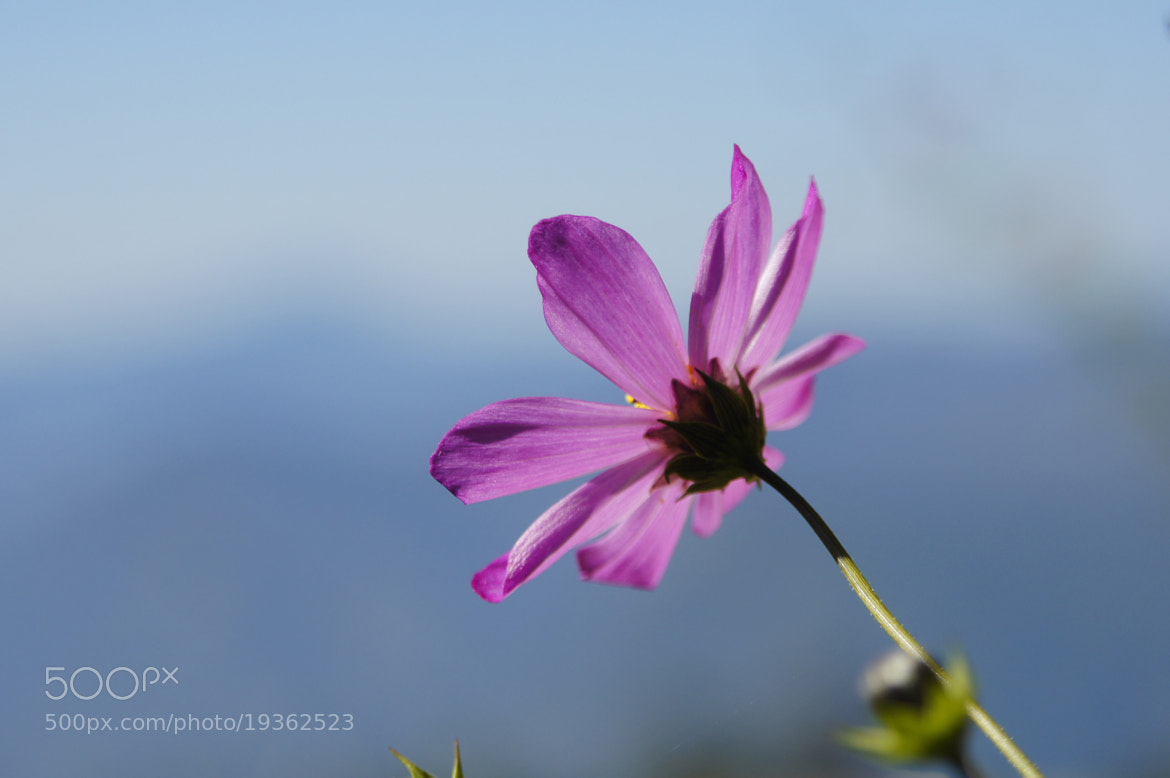 Photograph purple. by Afzal Khan on 500px