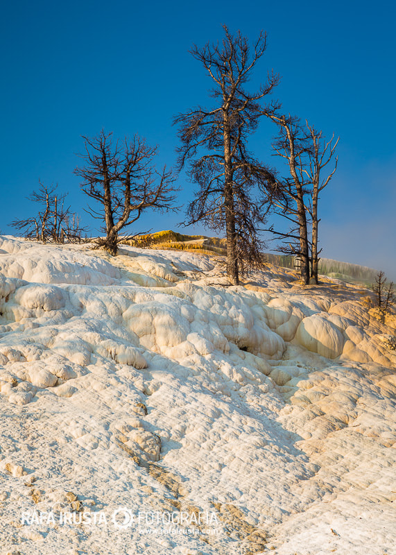 Photograph Dead trees at Mammoth Hot Springs by Rafa Irusta on 500px