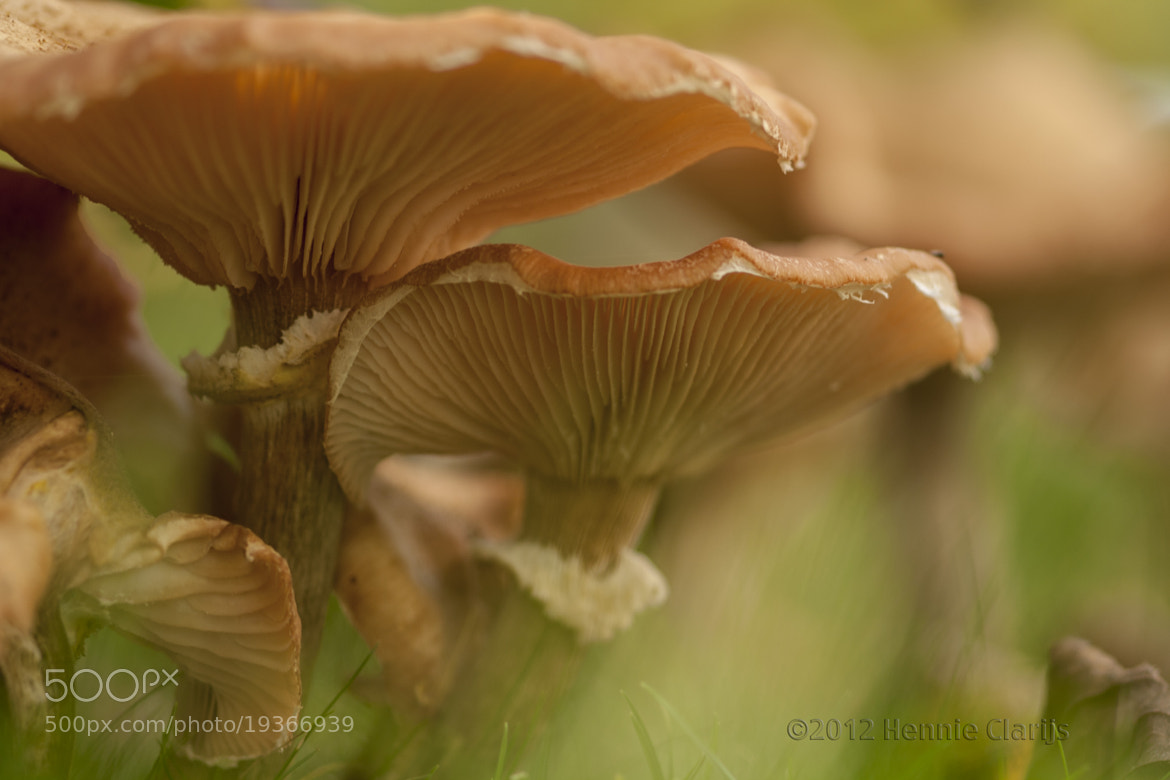 Photograph Close together by Hennie Clarijs on 500px