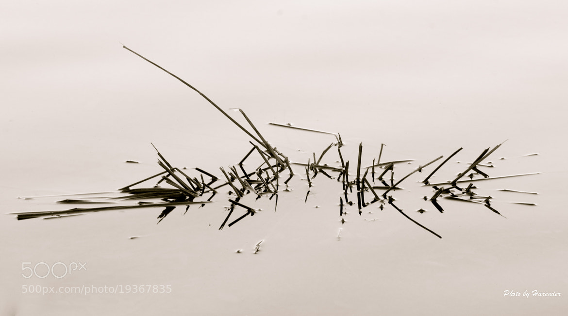 Photograph Just Twigs.. by Harender Saroha on 500px