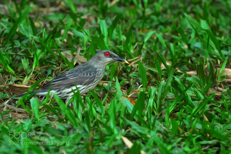 Photograph Bird by Nik Fikri on 500px