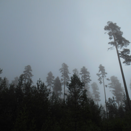 Forest in the mist, Nikon COOLPIX S3500
