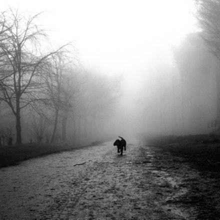 fog, Canon EOS 550D, Canon EF 24mm f/2.8 IS USM