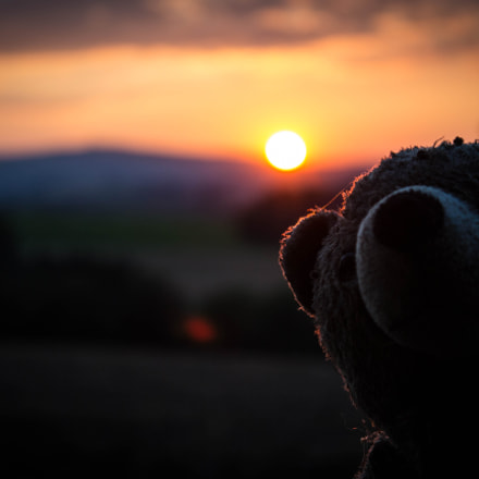 Teddy, Canon EOS 700D, Canon EF-S 18-55mm f/3.5-5.6 IS