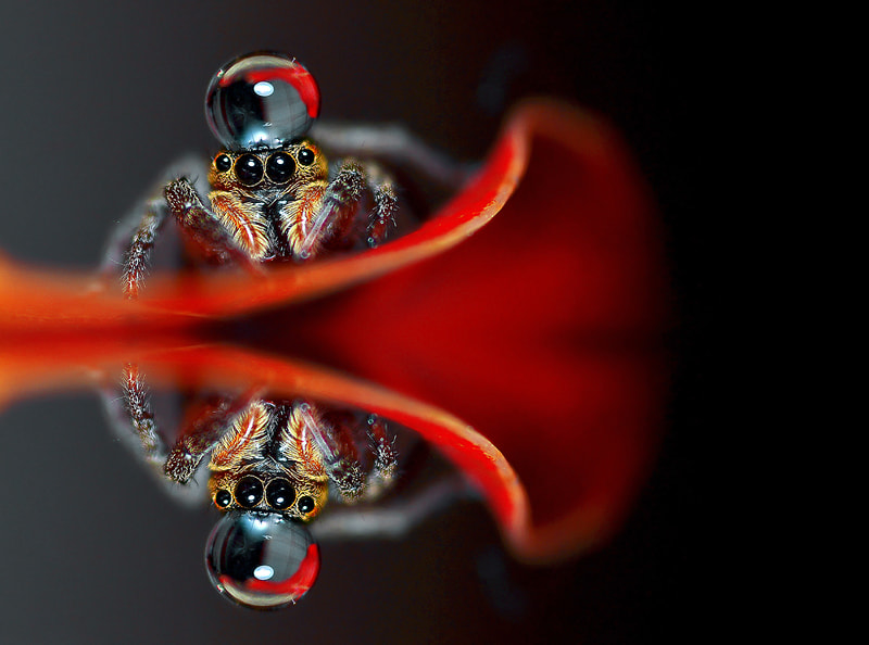 Photograph Spider...(oO^Oo)... by Bu Balus on 500px